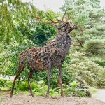 Steel Stag Brodick Castle