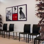 Vets Surgery Graphics